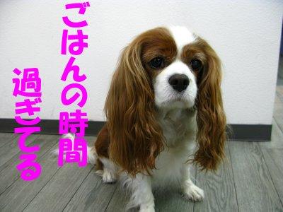 b0185323_1695563.jpg