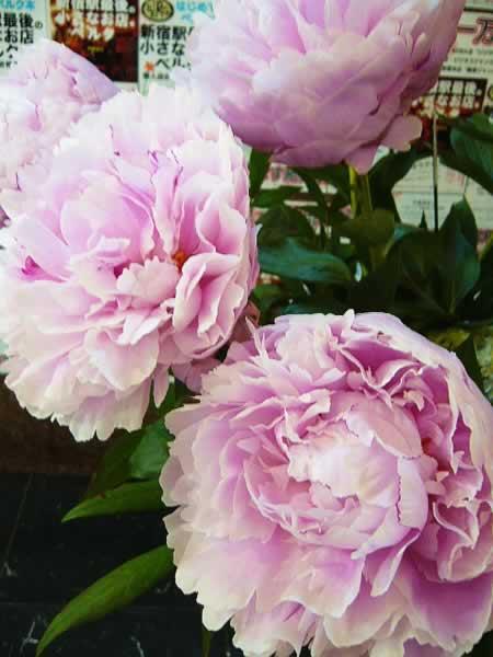 花とベルクのあいだで 09/5/29_c0069047_23431664.jpg