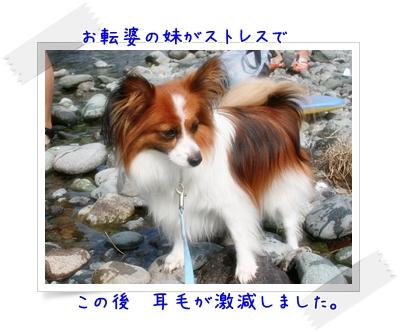 d0013149_1404019.jpg