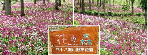 飛騨古川へ…小旅行_a0089450_2330179.jpg