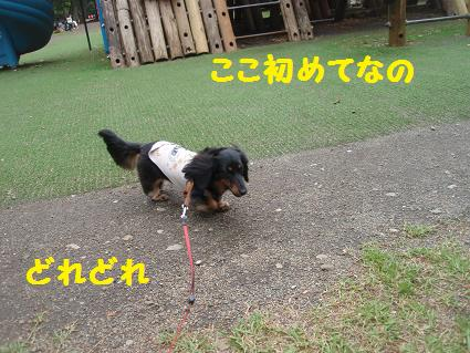 c0151866_2201994.jpg