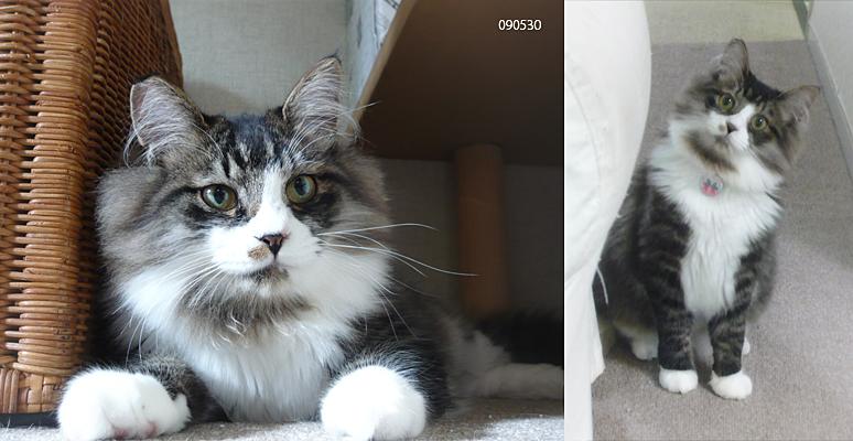 猫観察日記_a0002672_12255620.jpg