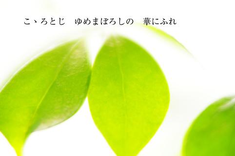 b0146278_115169.jpg