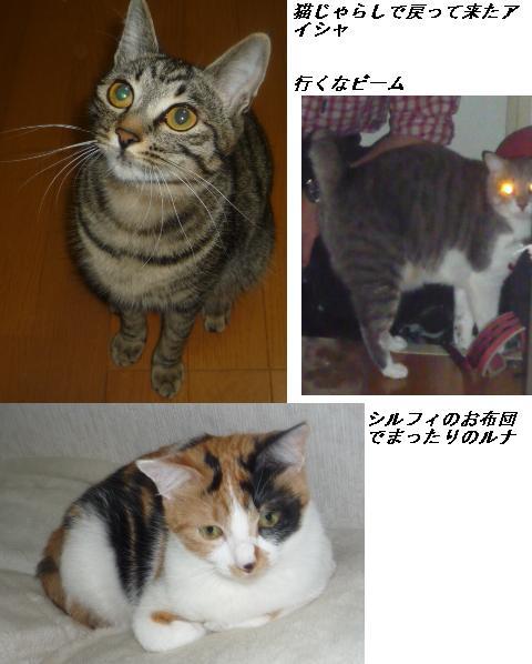 b0112380_1045573.jpg