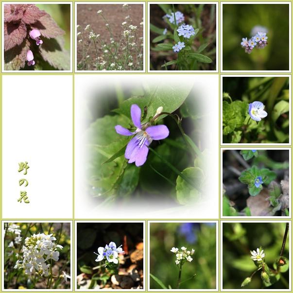 f0146493_011140.jpg