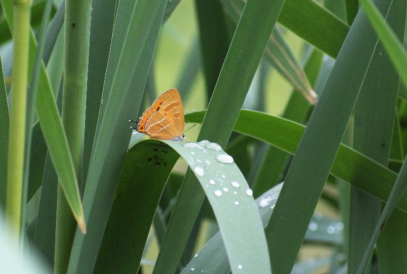 5月30日 雨・雨・雨・・・(><)_b0078795_15363242.jpg