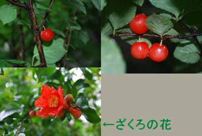f0109202_20235516.jpg