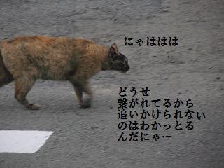 d0104209_201235.jpg