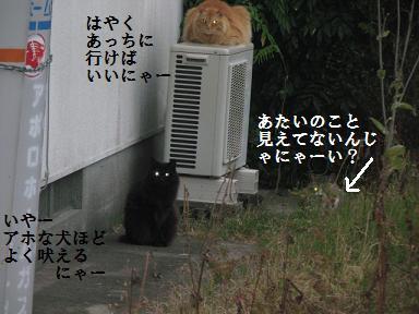 d0104209_2044013.jpg