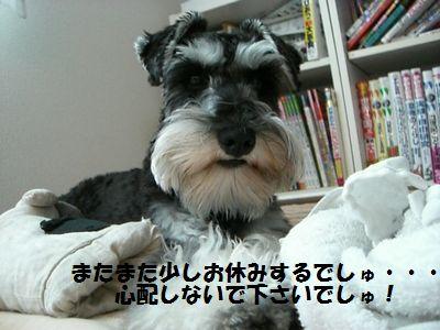 f0197317_17371736.jpg