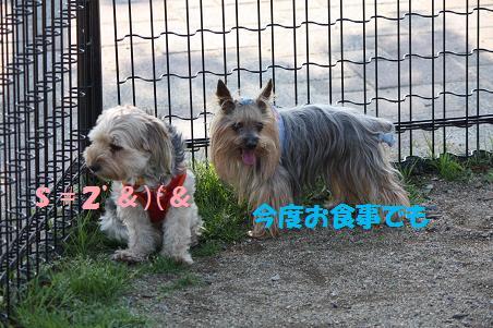 f0114128_21423241.jpg