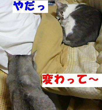 暑いのか寒いのか_f0002743_11325878.jpg