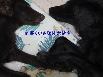 b0148945_23475647.jpg
