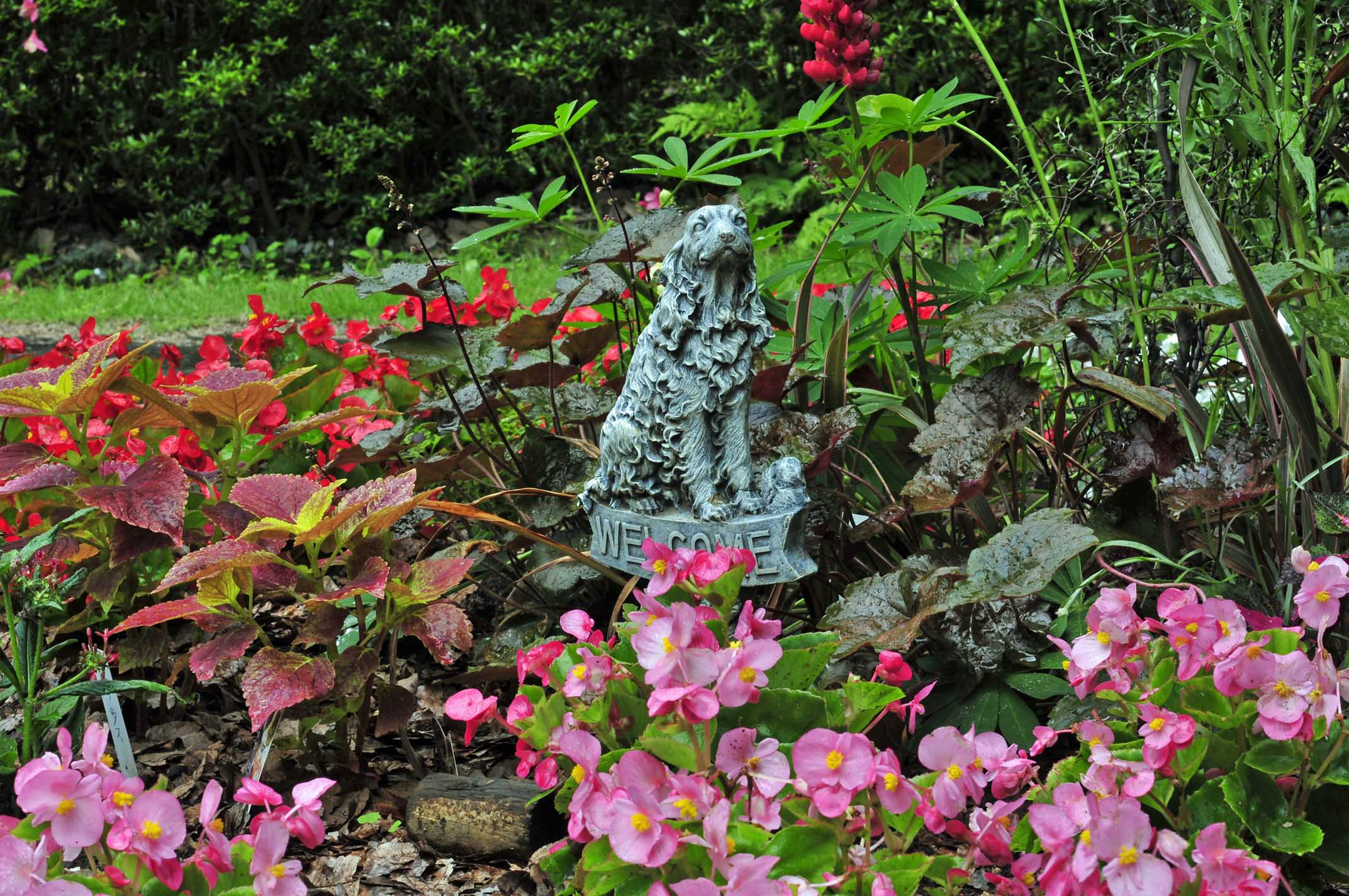 雨の日のお庭_e0157647_19172420.jpg