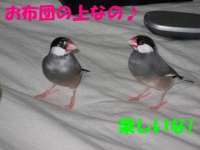 b0158061_20214729.jpg