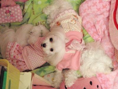 カリちゃんの赤ちゃん産まれました〜(^.^)_b0001465_1217393.jpg