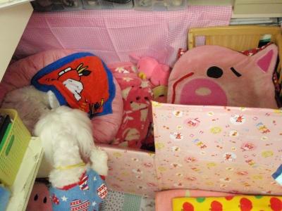 カリちゃんの赤ちゃん産まれました〜(^.^)_b0001465_1220043.jpg