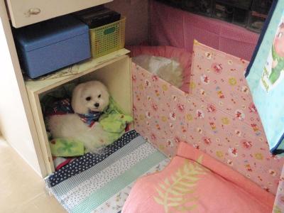 カリちゃんの赤ちゃん産まれました〜(^.^)_b0001465_1224680.jpg