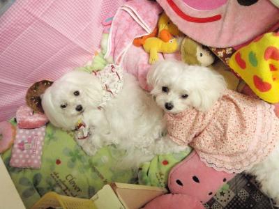 カリちゃんの赤ちゃん産まれました〜(^.^)_b0001465_1232842.jpg