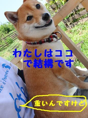 b0150665_20402193.jpg