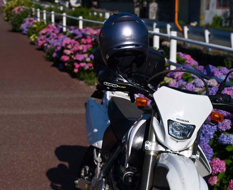 紫陽花街道_d0127876_1556015.jpg