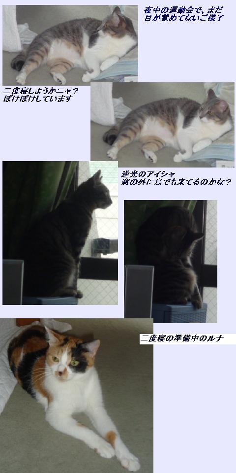 b0112380_10134261.jpg