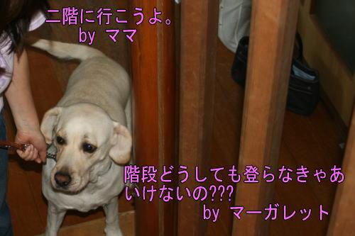 b0136683_16443068.jpg