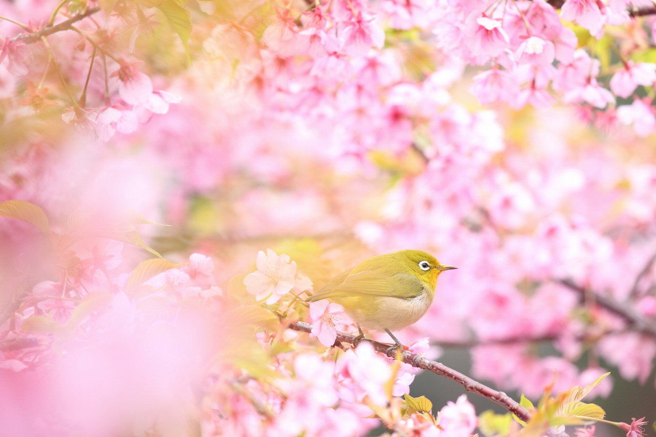 花の森_b0177584_1025929.jpg