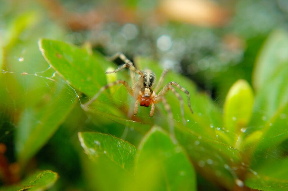 クモ・蜘蛛・くも_c0124795_17235798.jpg