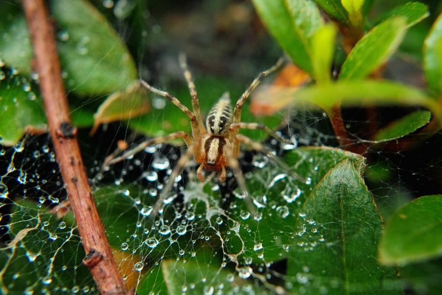 クモ・蜘蛛・くも_c0124795_17273081.jpg