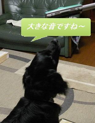f0176499_1431558.jpg