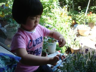 和みカフェでの商品の紹介 & マコ、花を切る!_e0166301_15332985.jpg