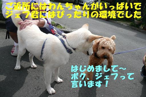 f0121712_23184211.jpg