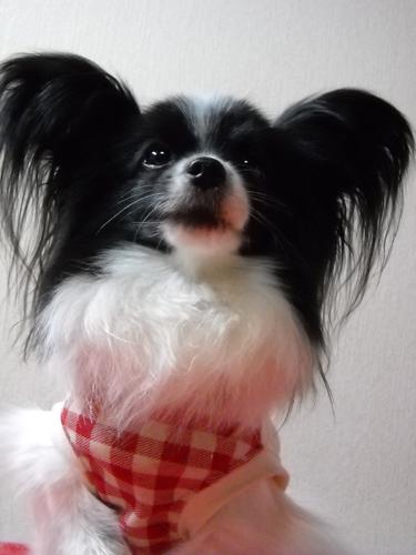 愛犬_f0200428_16112810.jpg