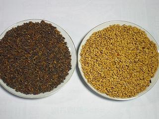 古代米の芽が出ました_b0123970_19372385.jpg
