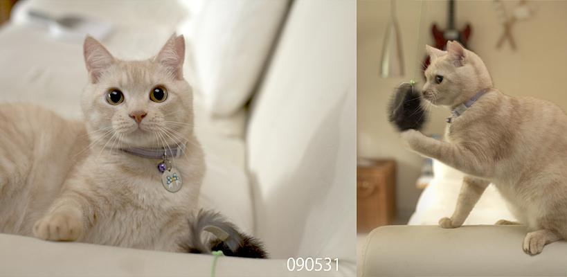 猫観察日記 その2 + _a0002672_1221457.jpg