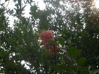Mさんの庭_d0087595_846305.jpg