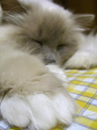 しばらくおやすみします(T_T)_a0045697_2024130.jpg