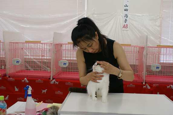 ピグモン@AJC CAT SHOW_e0033609_16202533.jpg