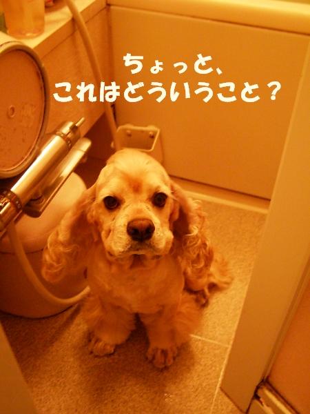 b0067012_135384.jpg