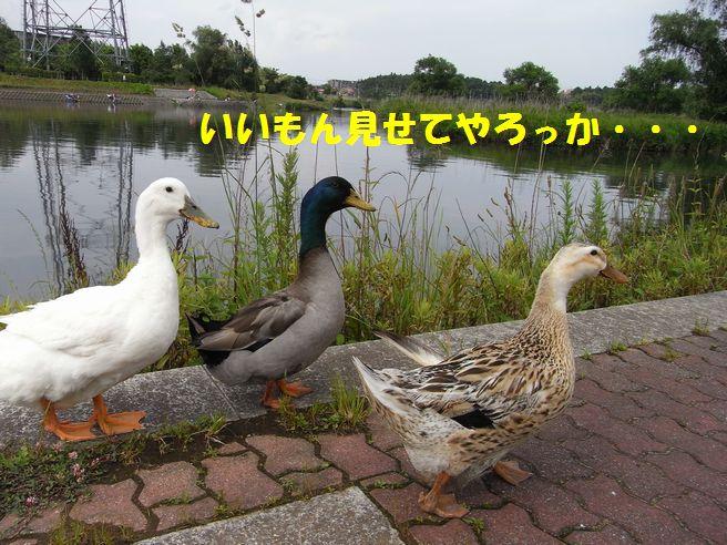 c0039114_013173.jpg