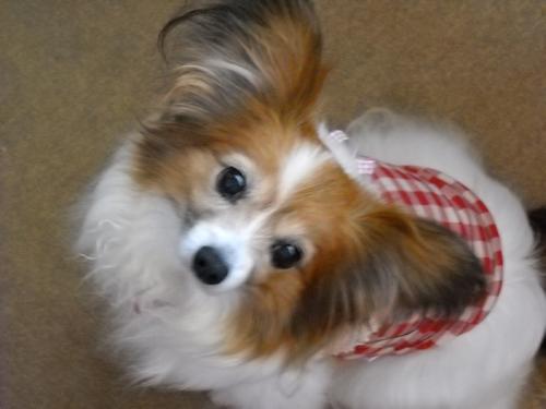 愛犬_f0200428_8374359.jpg