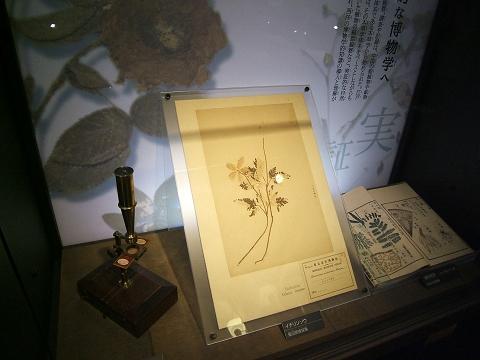 上野の国立科学博物館 その3_e0089232_2057288.jpg