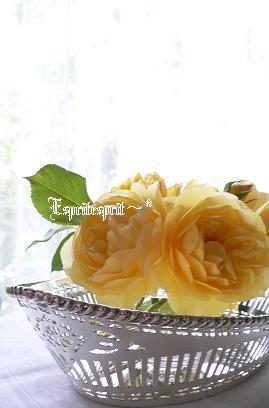 f0142141_221615.jpg