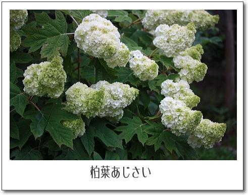 b0066947_20543323.jpg