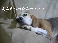 b0098660_20505248.jpg