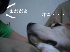 b0098660_20513061.jpg