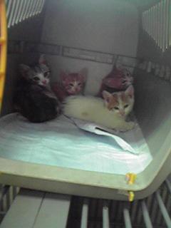 保護してきた子猫たち_c0167175_19271729.jpg