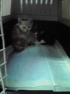 保護してきた子猫たち_c0167175_19274190.jpg