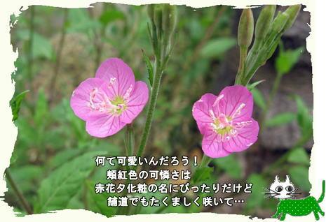 f0137096_21544188.jpg